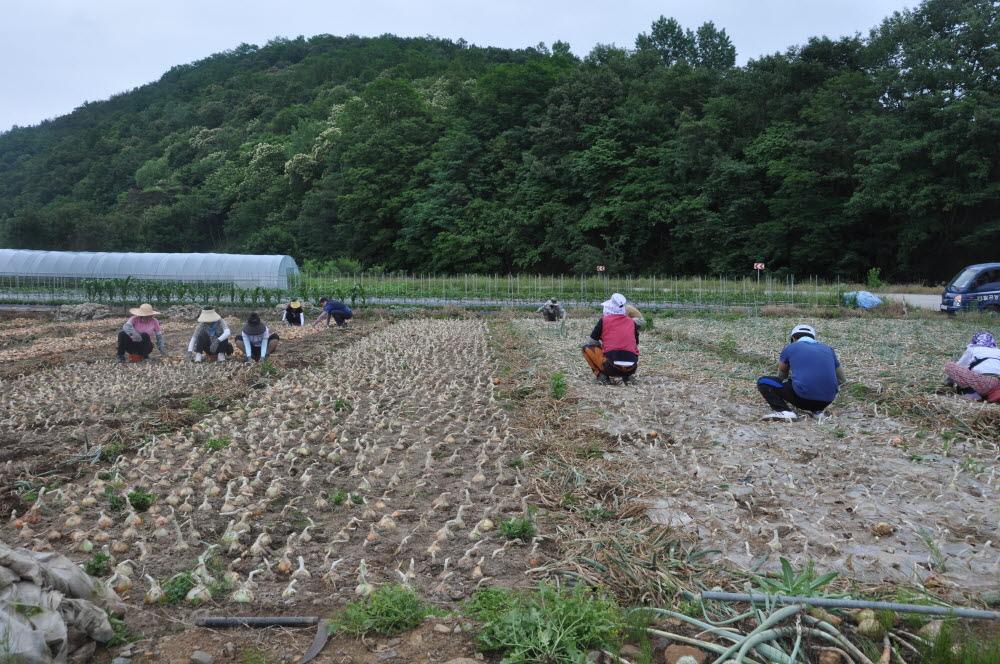 2014년 팔공농협 농가일손돕기 실시1.JPG